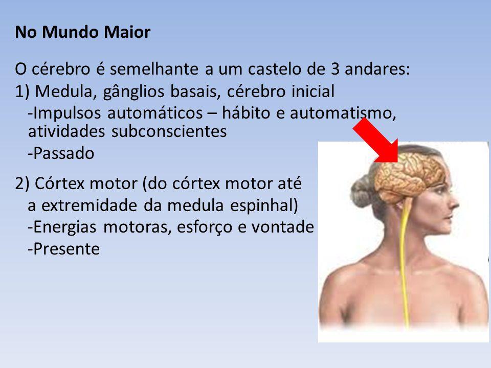 No Mundo Maior O cérebro é semelhante a um castelo de 3 andares: 1) Medula, gânglios basais, cérebro inicial -Impulsos automáticos – hábito e automatismo, atividades subconscientes -Passado 2) Córtex motor (do córtex motor até a extremidade da medula espinhal) -Energias motoras, esforço e vontade -Presente 3) Lobos frontais -Casa das noções superiores, ideal e meta superior a ser alcançada -Futuro