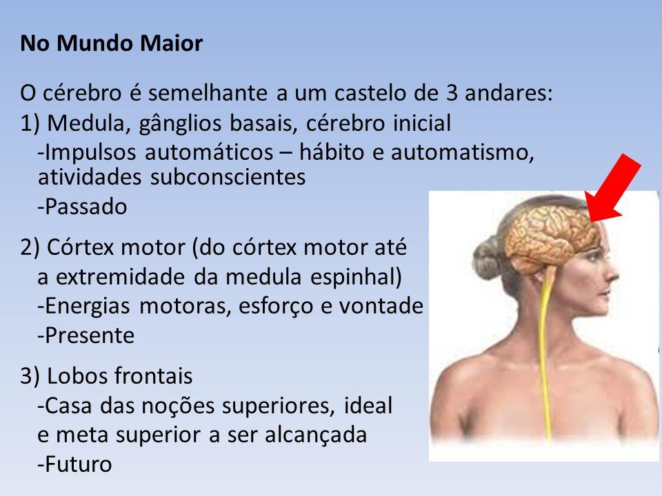 No Mundo Maior O cérebro é semelhante a um castelo de 3 andares: 1) Medula, gânglios basais, cérebro inicial -Impulsos automáticos – hábito e automati
