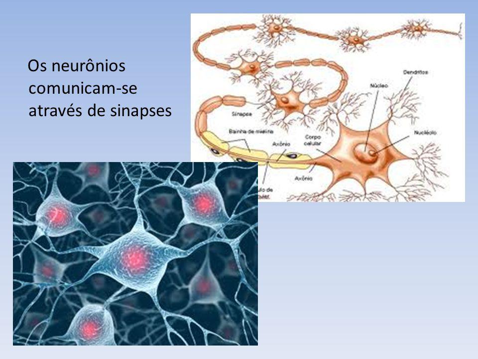 Gânglio: agrupamento de corpos celulares Nervo: axônios + envoltório Plexo: rede ou entrecruzamento, especialmente de veias e nervos.