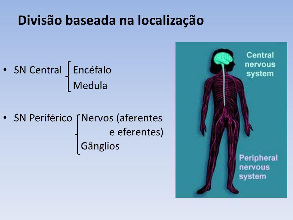 Divisão baseada na função SN Somático = da vida de relação Relaciona o organismo com o meio ambiente aferente eferente SN Autônomo = SN Visceral = da vida vegetativa Inervação e controle das vísceras, manutenção da constância do meio interno aferente eferente simpático parassimpático
