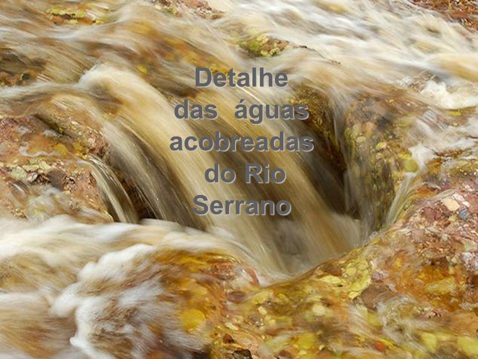 Detalhe das águas acobreadas do Rio Serrano do Rio Serrano