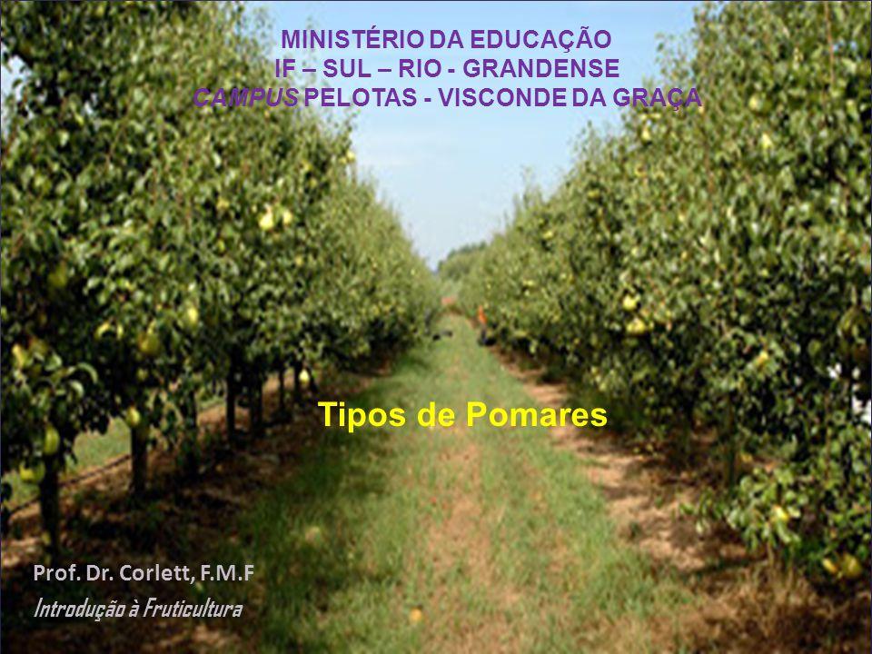 As plantas frutíferas podem ser classificadas de diferentes formas, as principais são quanto ao clima, hábito vegetativo e tipo de fruta.