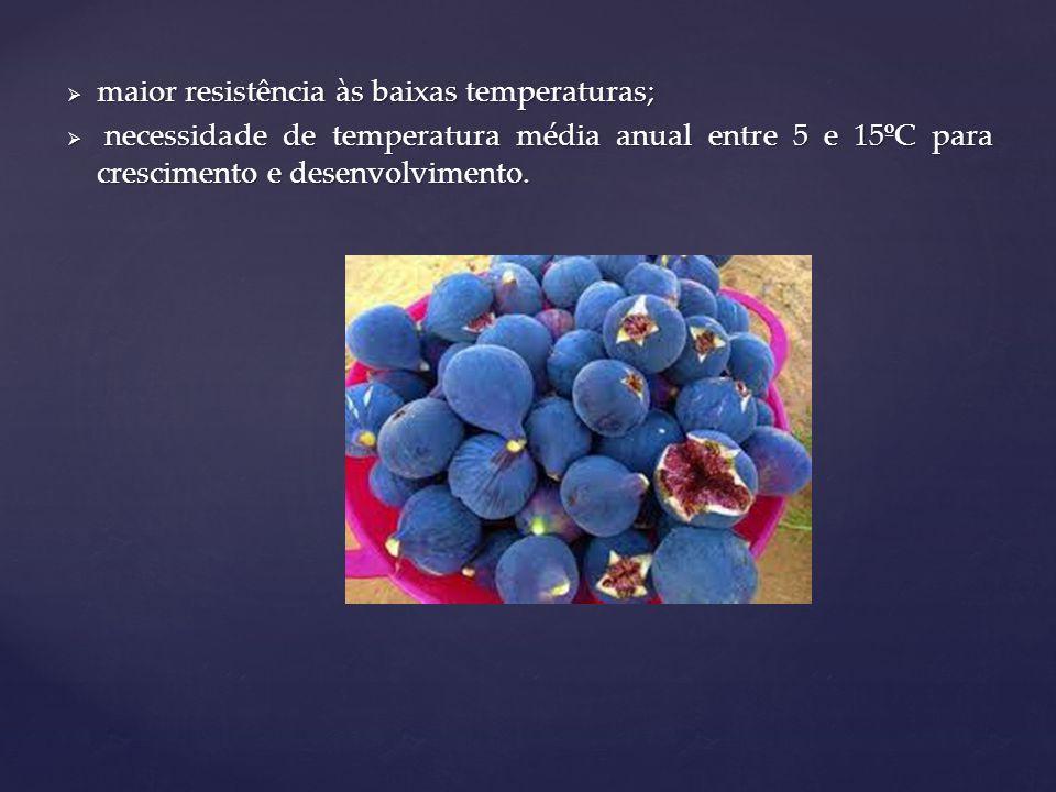 Frutíferas de clima temperado