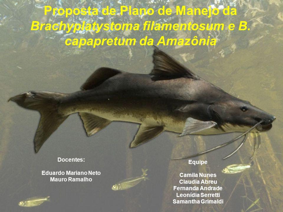 Proposta de Plano de Manejo da Brachyplatystoma filamentosum e B. capapretum da Amazônia Equipe Camila Nunes Claudia Abreu Fernanda Andrade Leonídia S