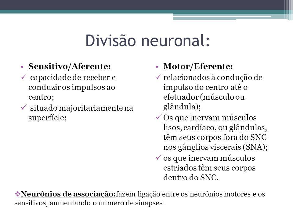 Células da glia: A relação de neurônios com células da glia ocorre tanto no SNC quanto no SNP: SNC : astrócitos, oligodendrócitos, microgliócitos e células ependimárias; SNP:células satélites e as células de Schwann.