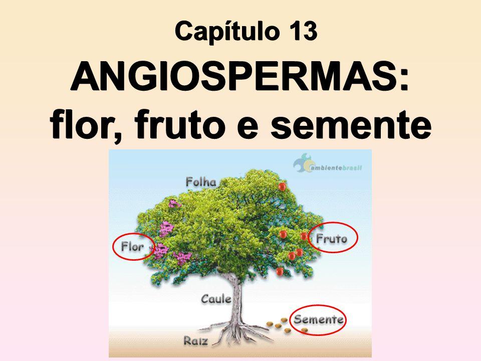 ANGIOSPERMAS: flor, fruto e semente Capítulo 13