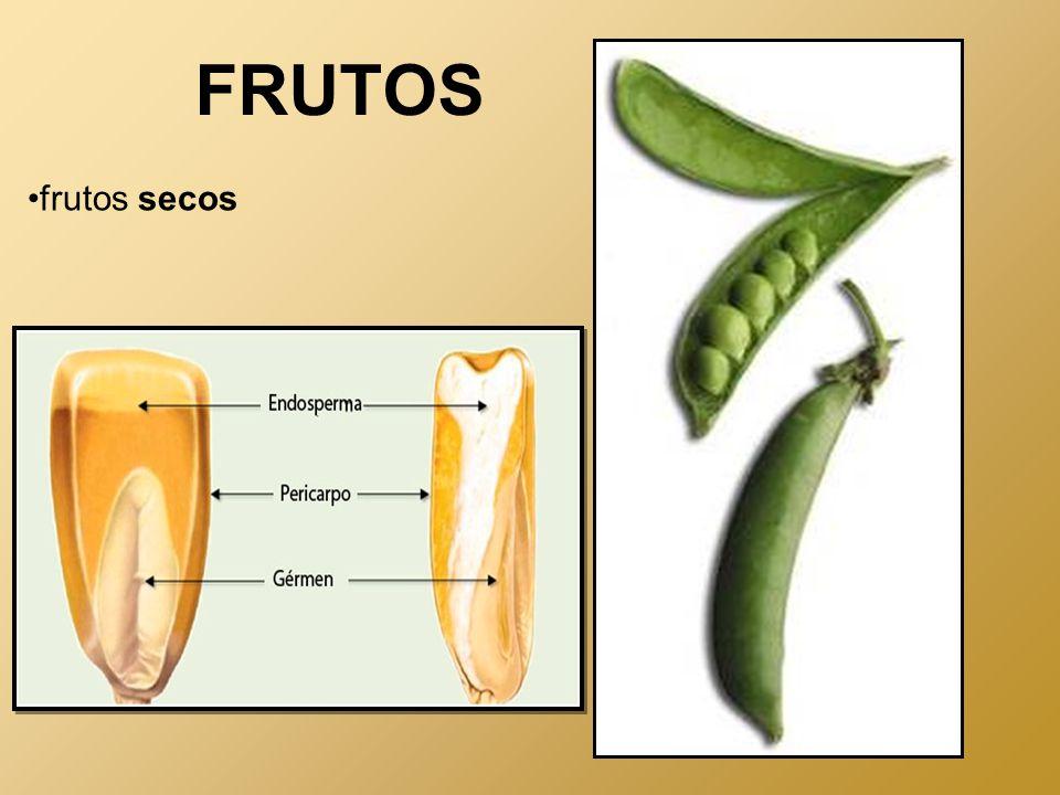 FRUTOS frutos secos