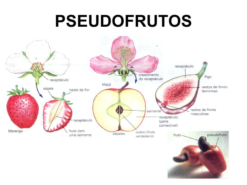 PSEUDOFRUTOS falsos frutos: cajú: pedúnculo da flor maçã e morango: receptáculo da flor