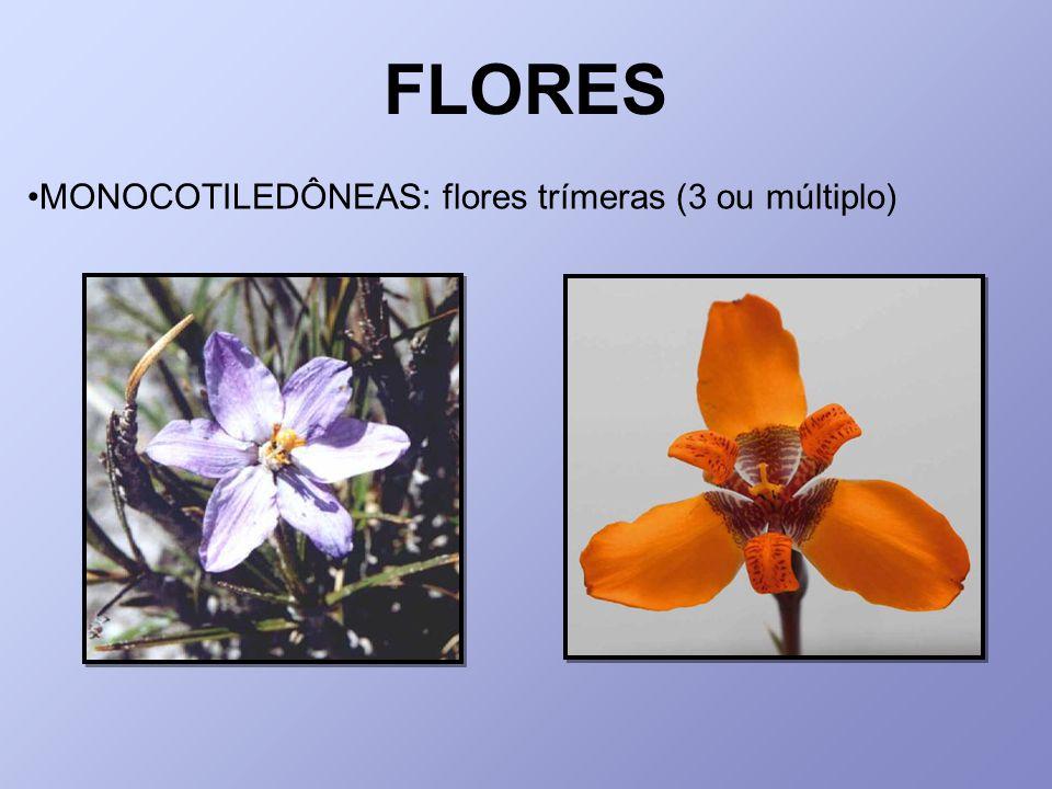 FLORES MONOCOTILEDÔNEAS: flores trímeras (3 ou múltiplo)