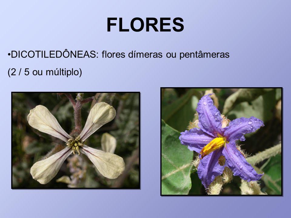 FLORES DICOTILEDÔNEAS: flores dímeras ou pentâmeras (2 / 5 ou múltiplo)