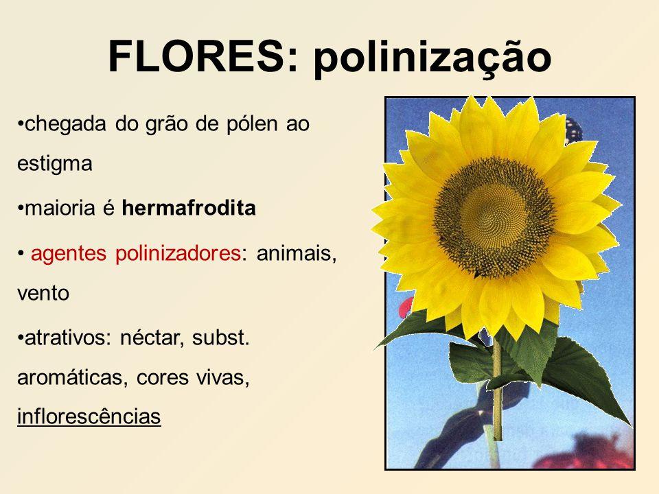 FLORES: polinização chegada do grão de pólen ao estigma maioria é hermafrodita agentes polinizadores: animais, vento atrativos: néctar, subst. aromáti