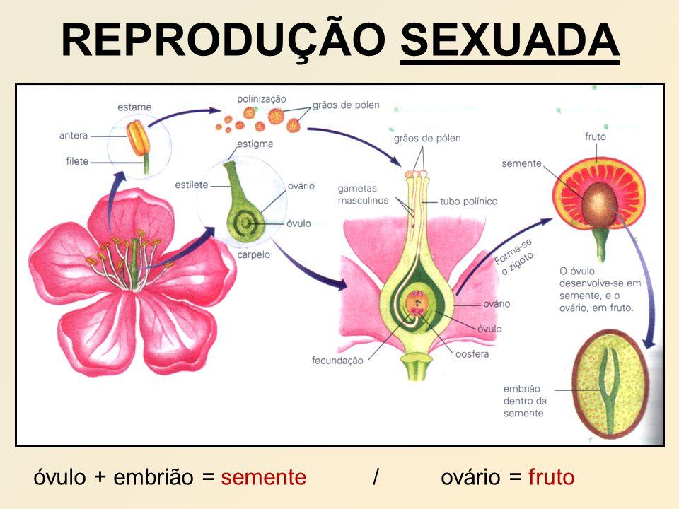 REPRODUÇÃO SEXUADA óvulo + embrião = semente/ovário = fruto