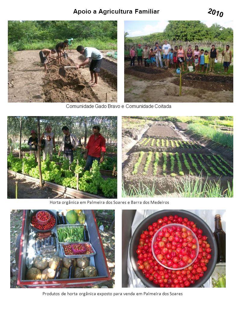 Apoio a Agricultura Familiar Horta orgânica em Palmeira dos Soares e Barra dos Medeiros Produtos de horta orgânica exposto para venda em Palmeira dos
