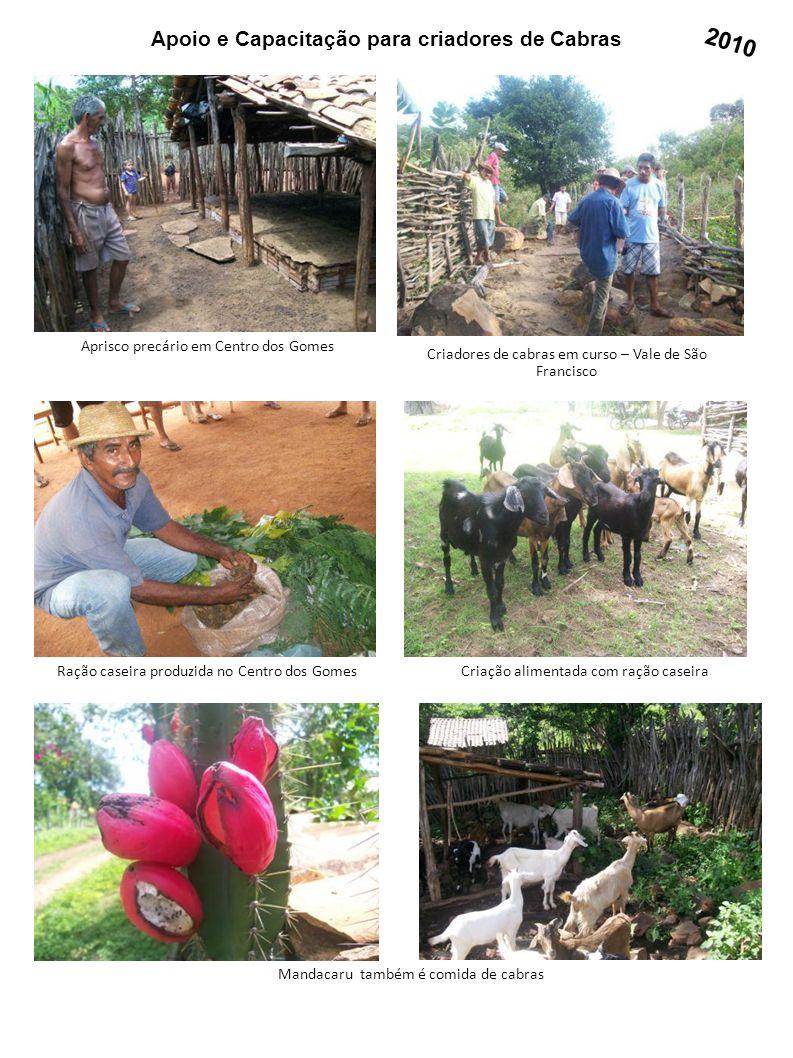Apoio e Capacitação para criadores de Cabras Aprisco precário em Centro dos Gomes Criadores de cabras em curso – Vale de São Francisco Criação aliment