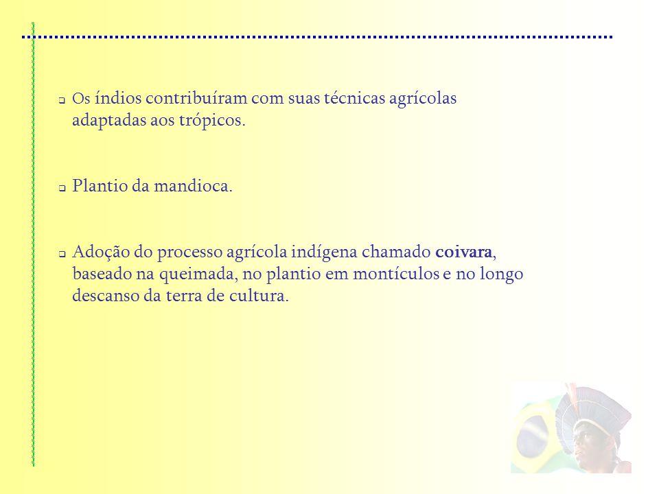 Os índios contribuíram com suas técnicas agrícolas adaptadas aos trópicos. Plantio da mandioca. Adoção do processo agrícola indígena chamado coivara,