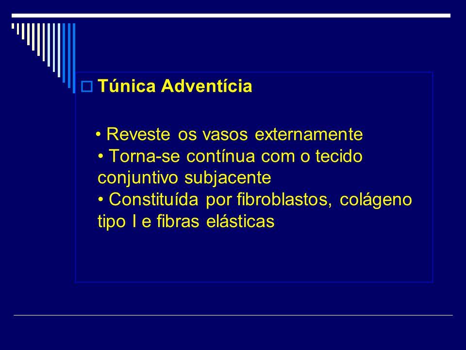 Túnica Adventícia Reveste os vasos externamente Torna-se contínua com o tecido conjuntivo subjacente Constituída por fibroblastos, colágeno tipo I e fibras elásticas