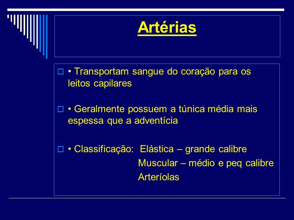 Artérias Transportam sangue do coração para os leitos capilares Geralmente possuem a túnica média mais espessa que a adventícia Classificação: Elástica – grande calibre Muscular – médio e peq calibre Arteríolas