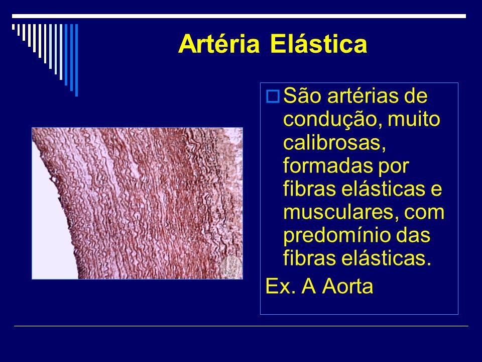 Artéria Elástica São artérias de condução, muito calibrosas, formadas por fibras elásticas e musculares, com predomínio das fibras elásticas. Ex. A Ao