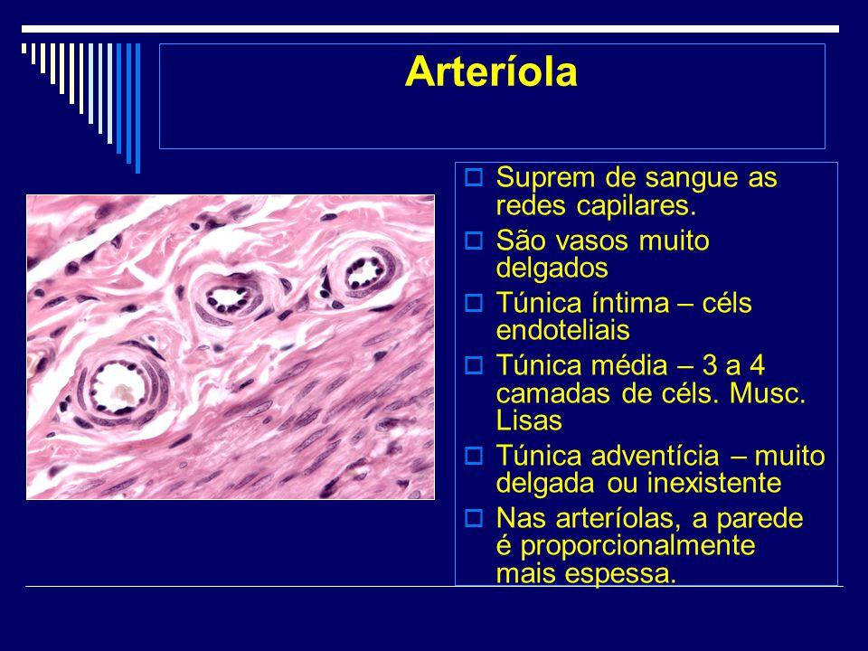 Arteríola Suprem de sangue as redes capilares. São vasos muito delgados Túnica íntima – céls endoteliais Túnica média – 3 a 4 camadas de céls. Musc. L