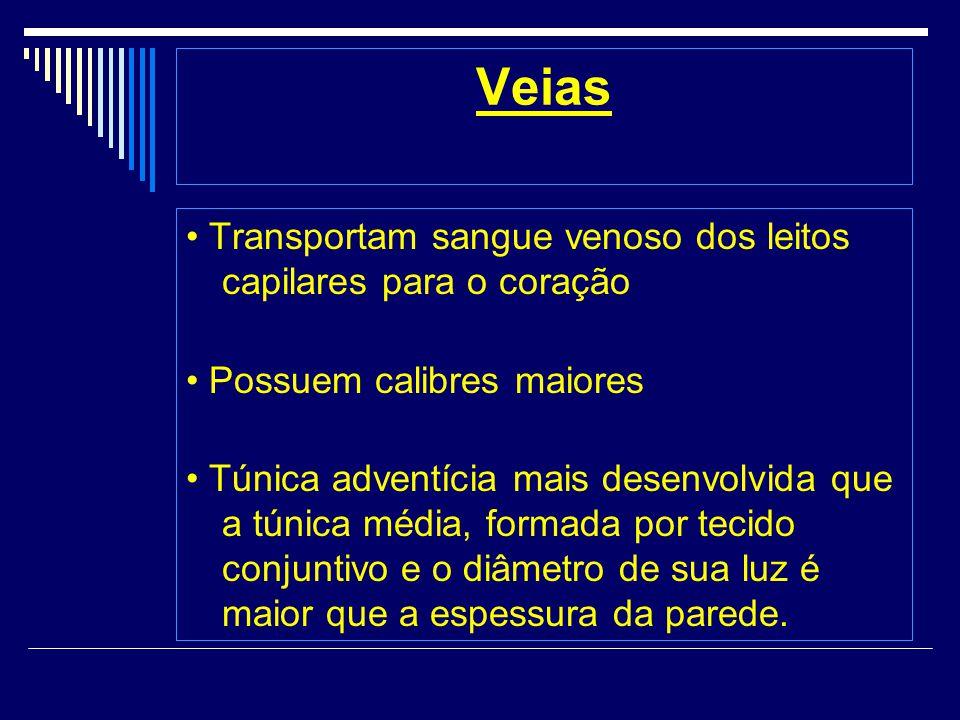 Veias Transportam sangue venoso dos leitos capilares para o coração Possuem calibres maiores Túnica adventícia mais desenvolvida que a túnica média, formada por tecido conjuntivo e o diâmetro de sua luz é maior que a espessura da parede.