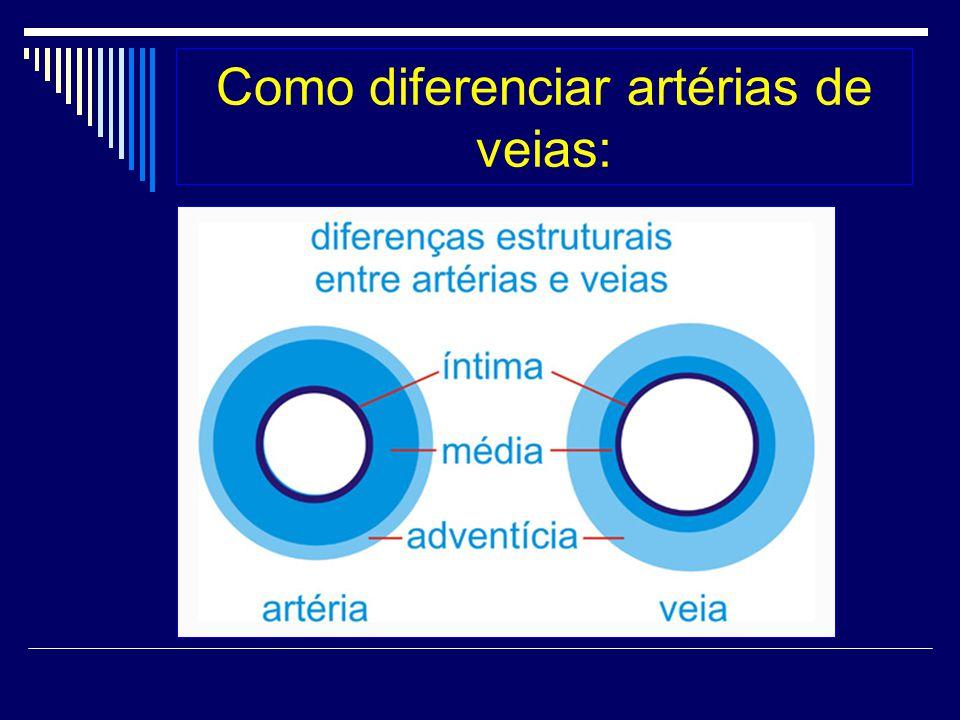 Como diferenciar artérias de veias: