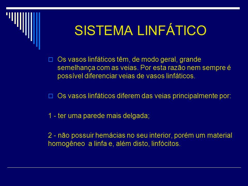 SISTEMA LINFÁTICO Os vasos linfáticos têm, de modo geral, grande semelhança com as veias.