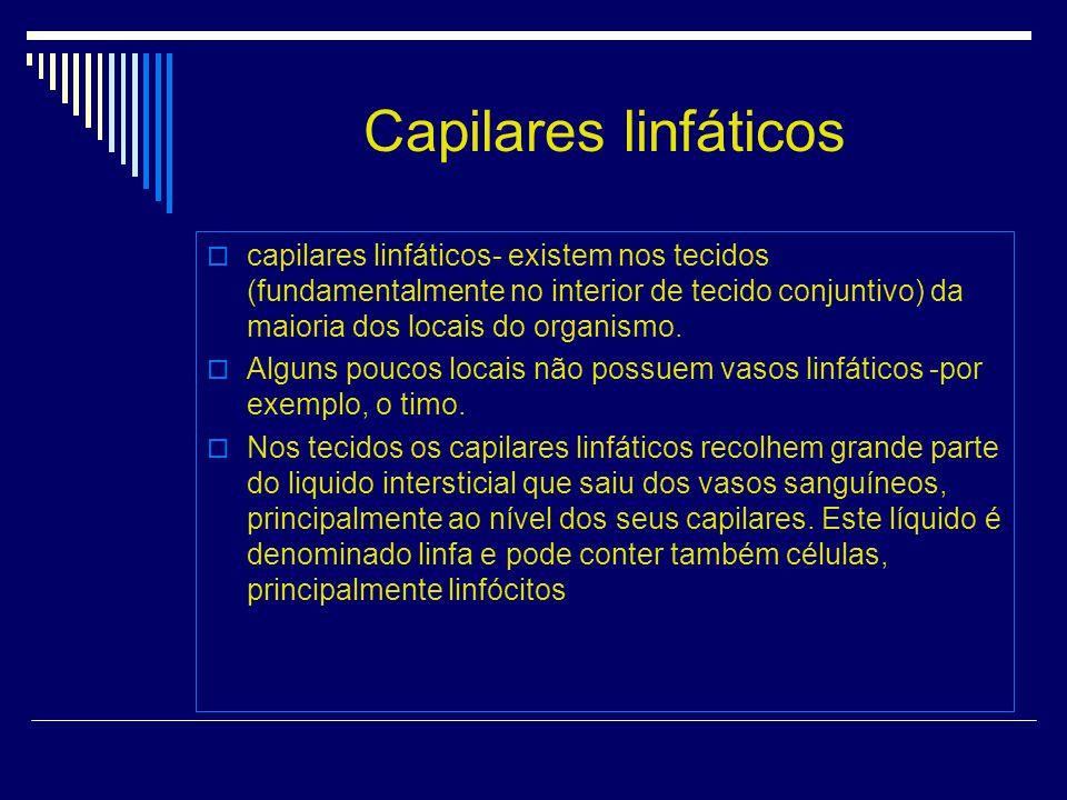 Capilares linfáticos capilares linfáticos- existem nos tecidos (fundamentalmente no interior de tecido conjuntivo) da maioria dos locais do organismo.
