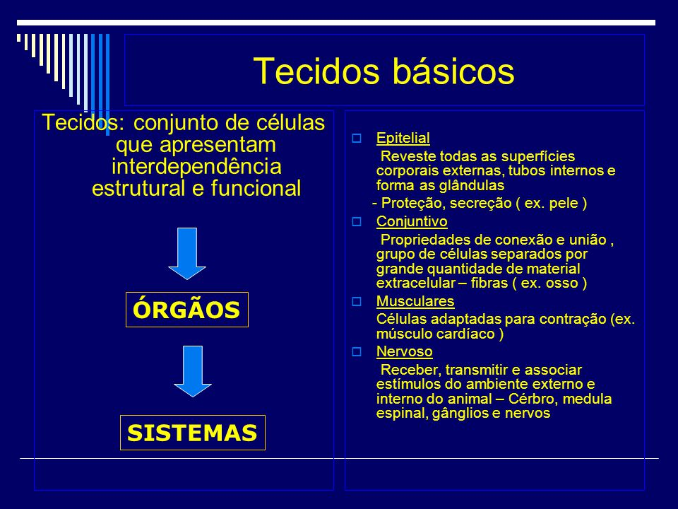 Tecidos básicos Tecidos: conjunto de células que apresentam interdependência estrutural e funcional Epitelial Reveste todas as superfícies corporais e