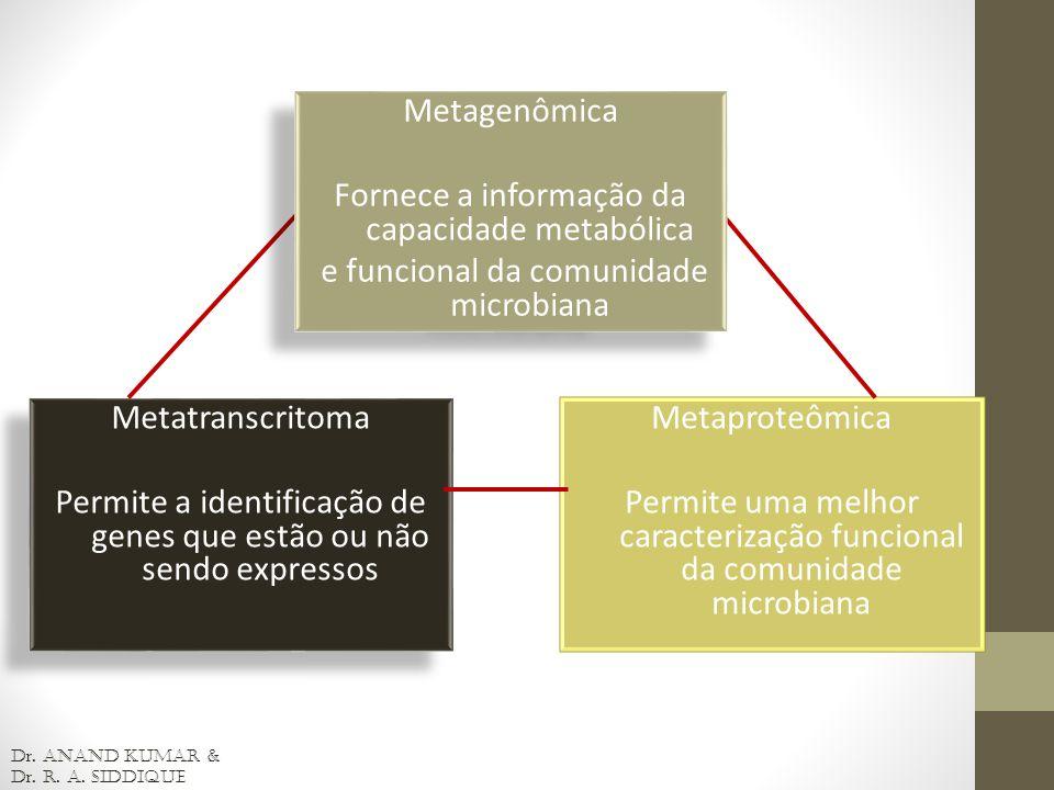 Metatranscritoma Permite a identificação de genes que estão ou não sendo expressos Metatranscritoma Permite a identificação de genes que estão ou não