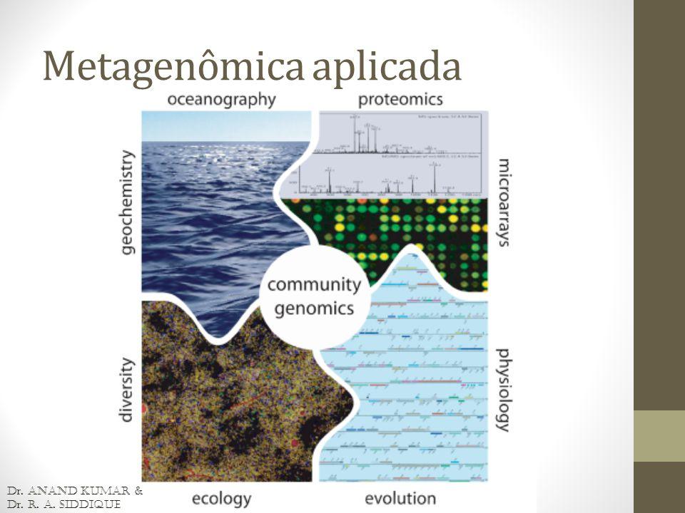 Classificação {Bioinfo} Análise de similaridade: IMG/M, MG-RAST, MEGAN, CARMA, Sort-ITEMS, MetaPhyler Análise composicional: Phylopythia, S-GSOM, PCAHIER, TACAO Similaridade e composicional: PhymmBL e MetaCluster Necessidade de sequências de referência* (marcador de RNAr) para fechar o alinhamento para sequenciamentos de leitura curta.