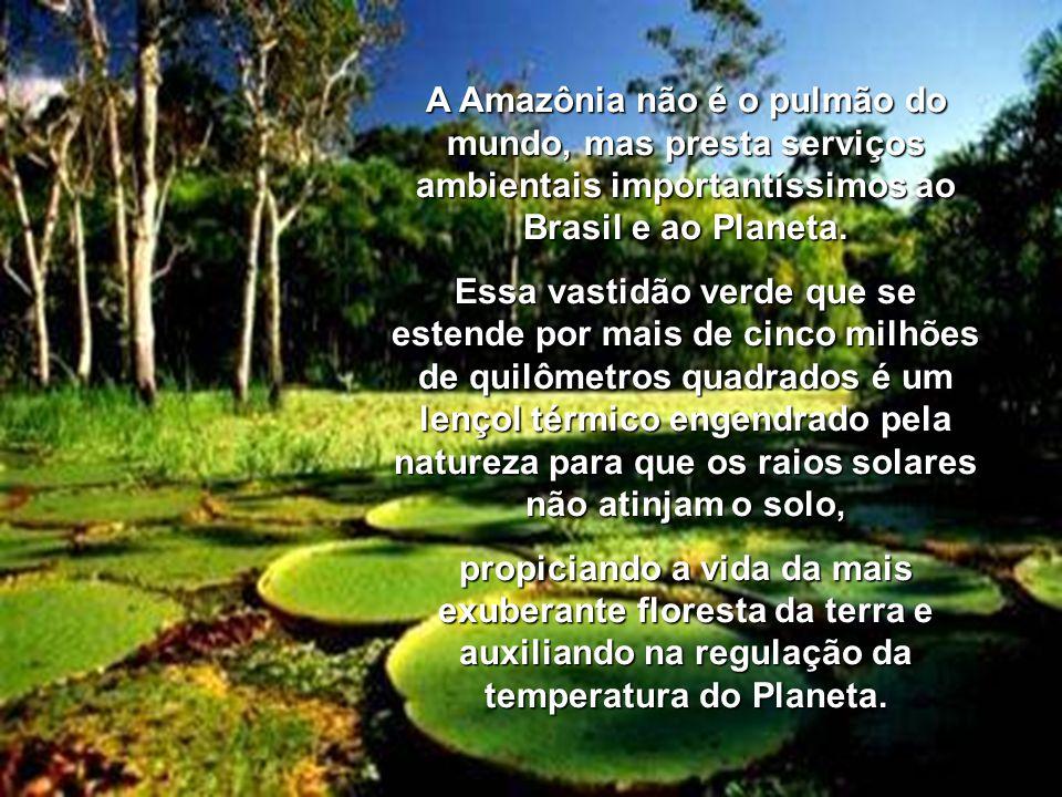 CARTA ABERTA DE ARTISTAS BRASILEIROS SOBRE A DEVASTAÇÃO DA AMAZÔNIA Acabamos de comemorar o menor desmatamento da Floresta Amazônica dos últimos três