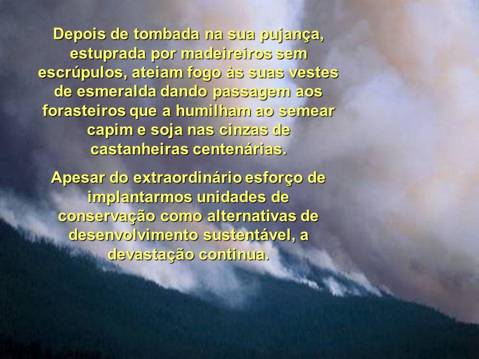 A Amazônia não é o pulmão do mundo, mas presta serviços ambientais importantíssimos ao Brasil e ao Planeta. Essa vastidão verde que se estende por mai