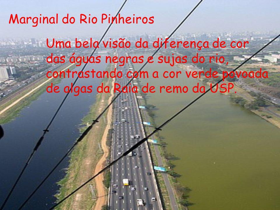 Marginal do Rio Pinheiros Uma bela visão da diferença de cor das águas negras e sujas do rio, contrastando com a cor verde povoada de algas da Raia de