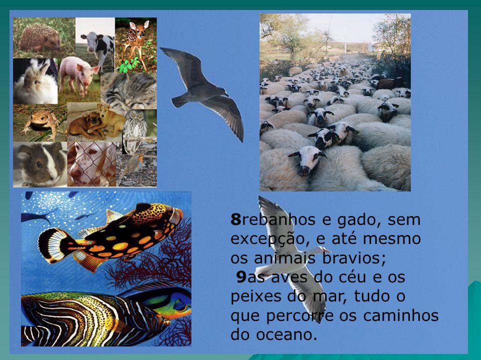 8rebanhos e gado, sem excepção, e até mesmo os animais bravios; 9as aves do céu e os peixes do mar, tudo o que percorre os caminhos do oceano.