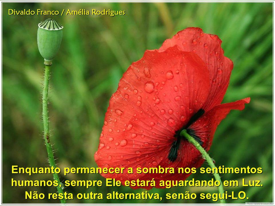 Divaldo Franco / Amélia Rodrigues preferindo deter-se nas trilhas sombrias da prepotência e da suprema inferioridade.