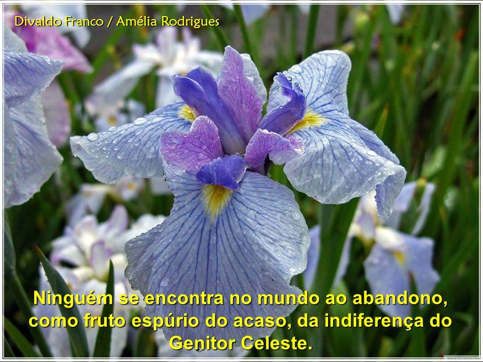 Amélia Rodrigues, foi notável poetisa, professora emérita, escritora consagrada, Amélia Rodrigues, foi notável poetisa, professora emérita, escritora consagrada, teatróloga, legítimo expoente cultural das Letras na Bahia.