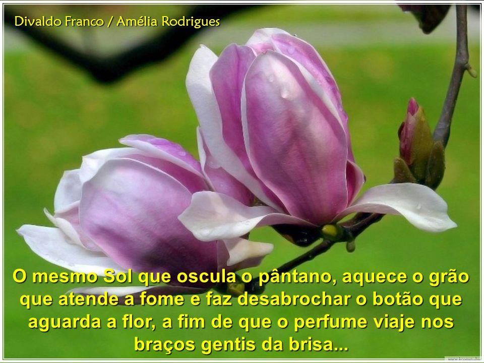 Divaldo Franco / Amélia Rodrigues O mesmo Sol que oscula o pântano, aquece o grão que atende a fome e faz desabrochar o botão que aguarda a flor, a fim de que o perfume viaje nos braços gentis da brisa...
