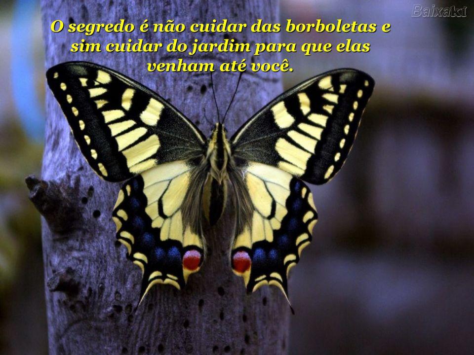 Palestra Pública: 27/12/2008 - Local: Paraná Clube O segredo é não cuidar das borboletas e sim cuidar do jardim para que elas venham até você.