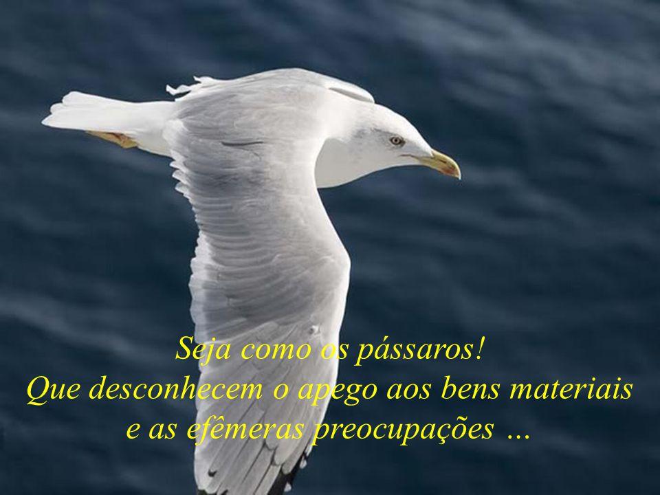 Seja como os pássaros! Que desconhecem o apego aos bens materiais e as efêmeras preocupações …