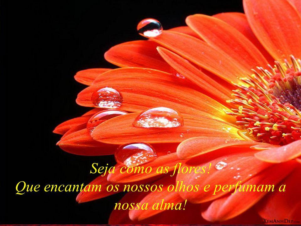 Seja como as flores! Que encantam os nossos olhos e perfumam a nossa alma!