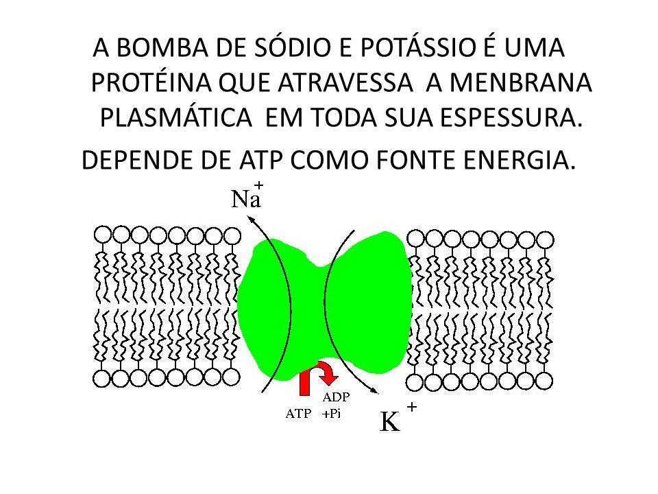 QUALQUER ALTERAÇÃO NOS SISTEMAS: -- ATP E MENBRANA -- COMPROMETE O FUNCIONAMENTO DA BOMDA.