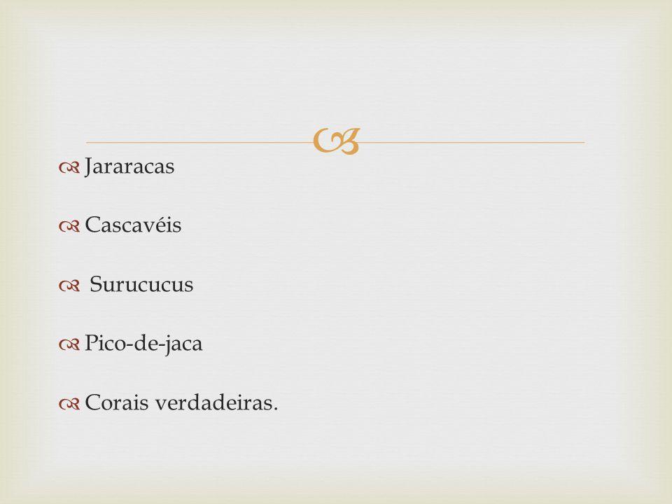 Jararacas Cascavéis Surucucus Pico-de-jaca Corais verdadeiras.