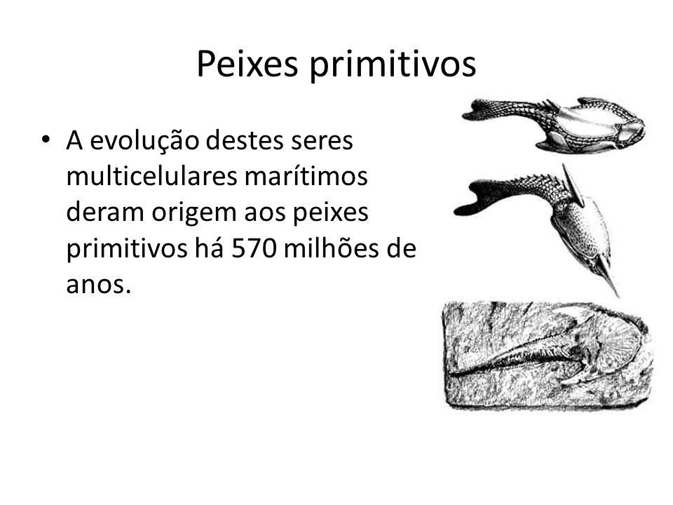 Peixes primitivos A evolução destes seres multicelulares marítimos deram origem aos peixes primitivos há 570 milhões de anos.