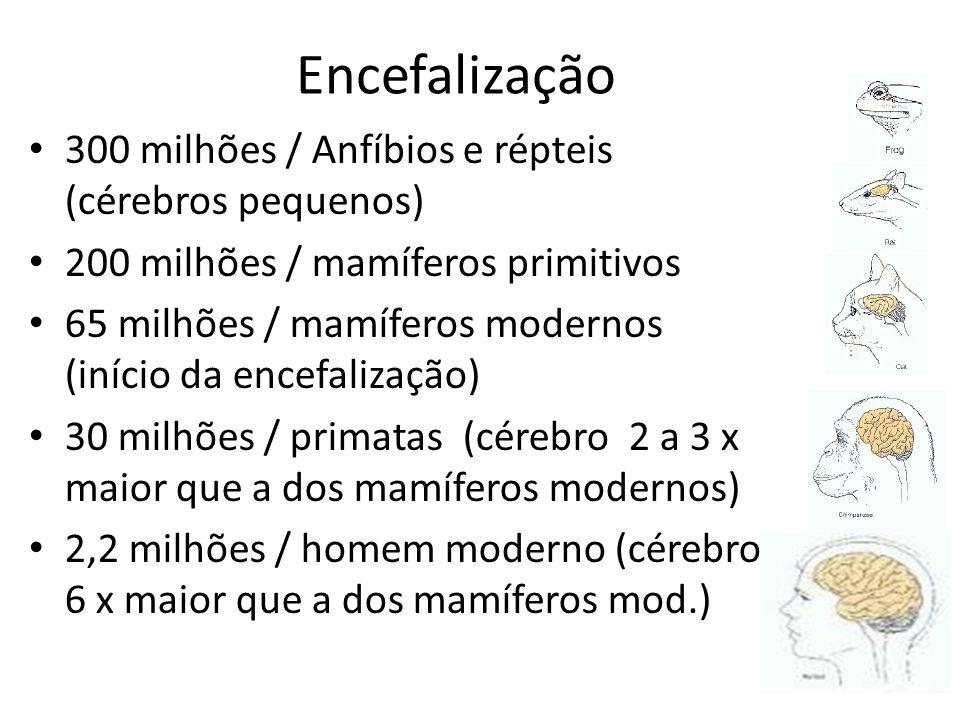 Encefalização 300 milhões / Anfíbios e répteis (cérebros pequenos) 200 milhões / mamíferos primitivos 65 milhões / mamíferos modernos (início da encef