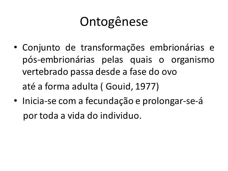 Ontogênese Conjunto de transformações embrionárias e pós-embrionárias pelas quais o organismo vertebrado passa desde a fase do ovo até a forma adulta