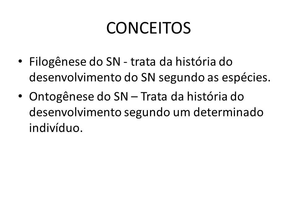 CONCEITOS Filogênese do SN - trata da história do desenvolvimento do SN segundo as espécies. Ontogênese do SN – Trata da história do desenvolvimento s