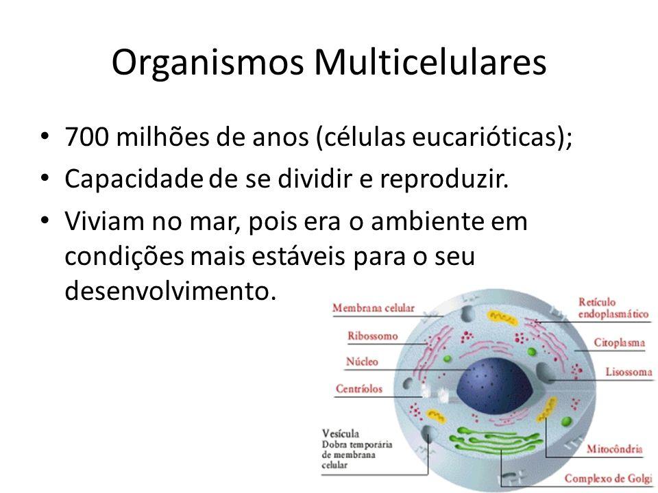 Organismos Multicelulares 700 milhões de anos (células eucarióticas); Capacidade de se dividir e reproduzir. Viviam no mar, pois era o ambiente em con