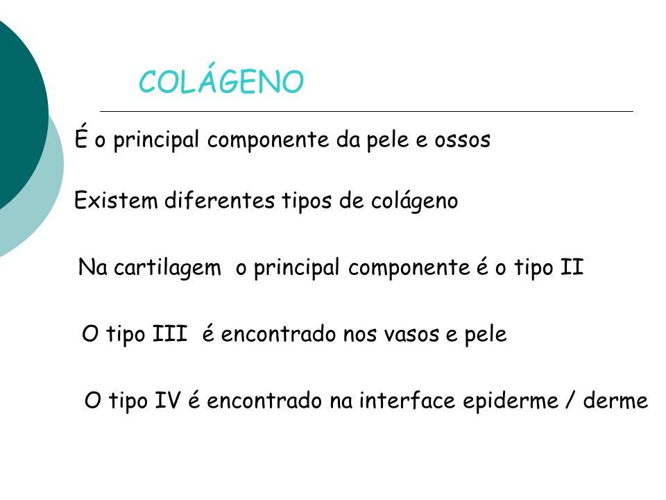COLÁGENO É o principal componente da pele e ossos Na cartilagem o principal componente é o tipo II Existem diferentes tipos de colágeno O tipo III é encontrado nos vasos e pele O tipo IV é encontrado na interface epiderme / derme