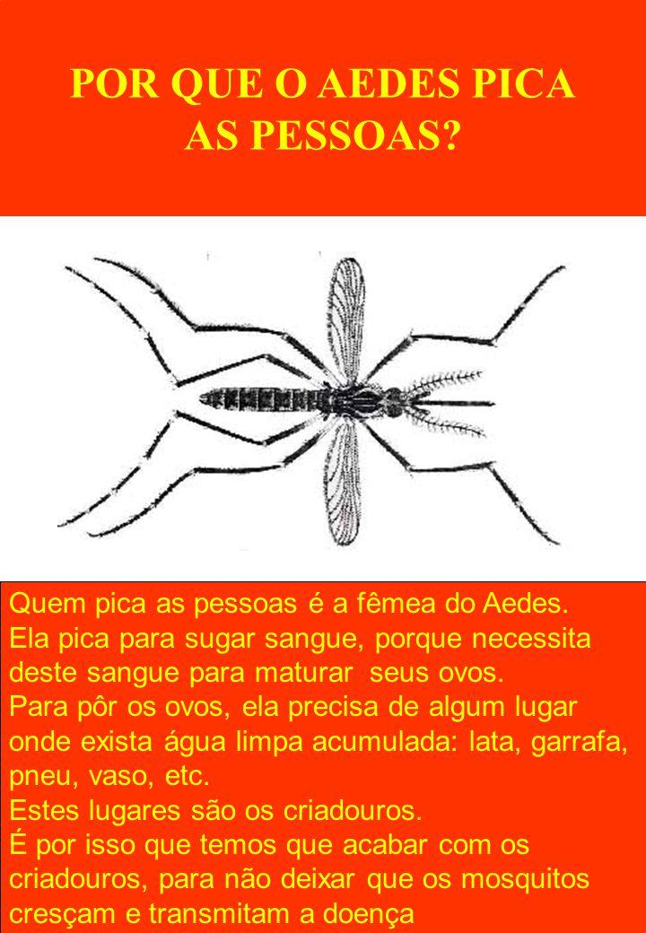 POR QUE O AEDES PICA AS PESSOAS? Quem pica as pessoas é a fêmea do Aedes. Ela pica para sugar sangue, porque necessita deste sangue para maturar seus