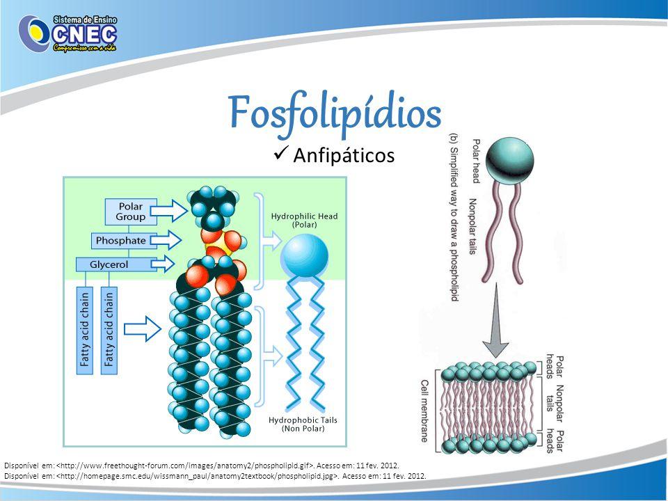 Fosfolipídios Disponível em:. Acesso em: 11 fev. 2012. Anfipáticos